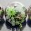 怦然心动的多肉植物玻璃花房