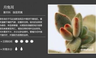 景天科其他属多肉植物图鉴