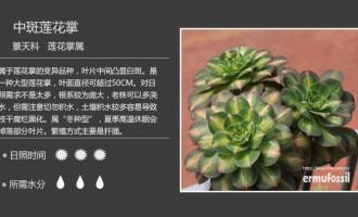 景天科莲花掌属多肉植物图鉴