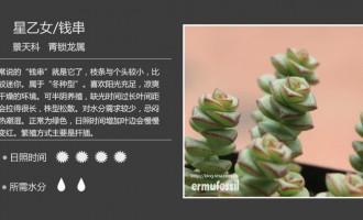 景天科青锁龙属多肉植物图鉴