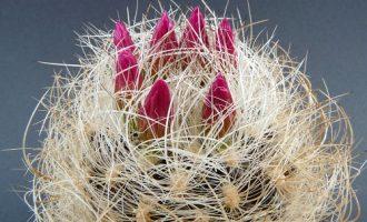 美丽的多肉植物开花照