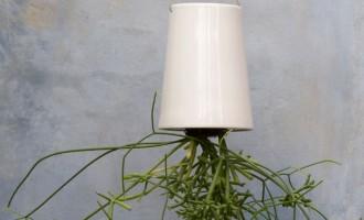 倒吊花盆,让植物倒着生长