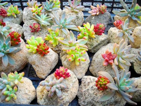 多肉植物的春季养护