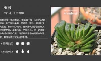 百合科十二卷属多肉植物图鉴