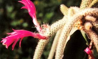 多肉植物12生肖凑趣