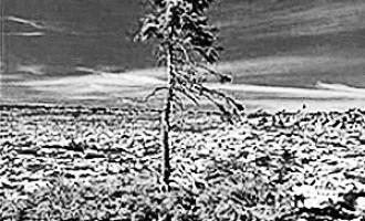 世界上寿命最长的植物