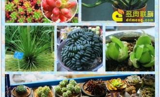 七月份多肉植物种植管理
