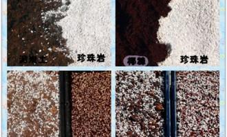 使用椰糠代替泥炭土实验