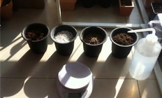 泥炭、椰糠、赤玉、珍珠岩的保水性测试