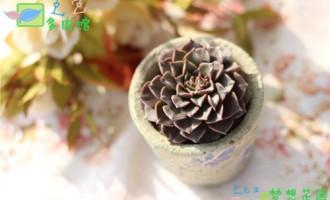 花开美丽莲