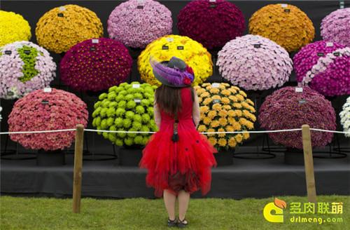 2014切尔西花卉展(Chelsea Garden Show)之1
