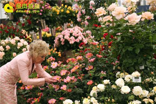 2014切尔西花卉展(Chelsea Garden Show)之2
