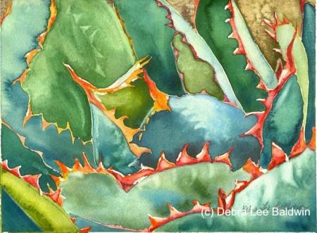 多肉植物水彩画前后对比之雷神