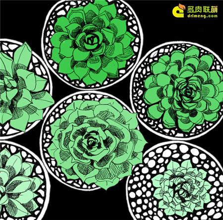 多肉植物水彩画系列之1