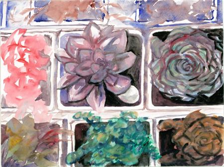多肉植物水彩画系列之10