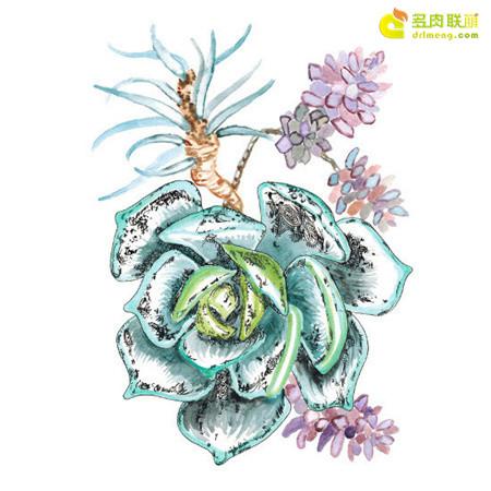 多肉植物水彩画 | 多肉联萌