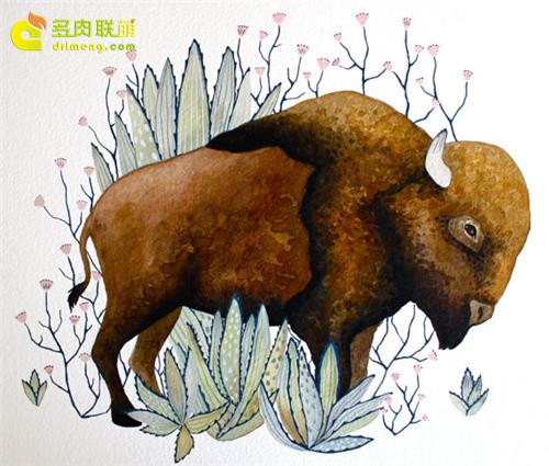 多肉植物与动物在一起系列水彩画之5