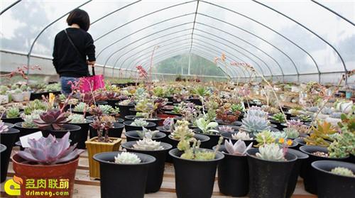 广州多肉植物大棚系列图片欣赏之1