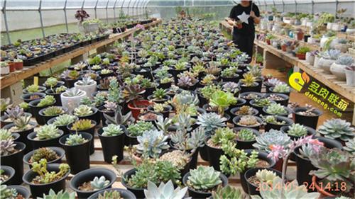 广州多肉植物大棚系列图片欣赏之3