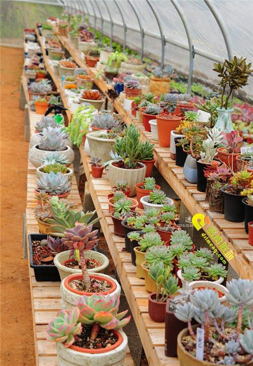 广州多肉植物大棚系列图片欣赏之5