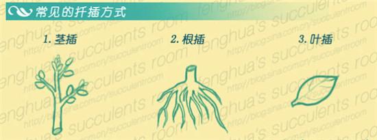 三种多肉植物扦插方式