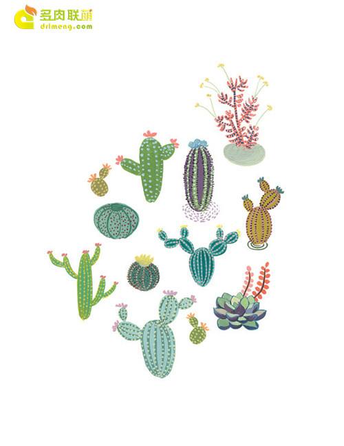 仙人掌水彩画系列图片之1