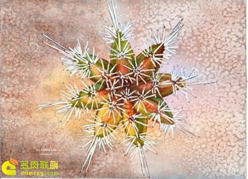 仙人掌水彩画系列图片之20