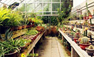 庐山植物园里的多肉植物