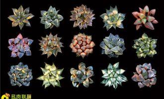 天外奇妍·多肉植物艺术摄影