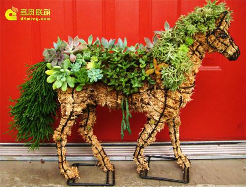 多肉植物的动物造型 |