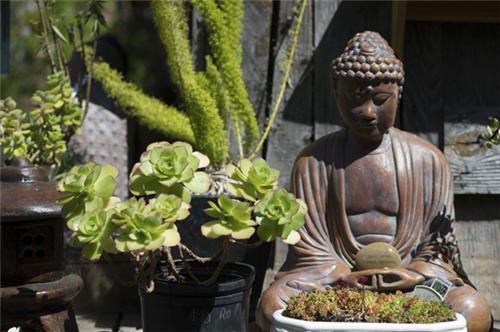 加州路边的莲花掌属类多肉植物-8