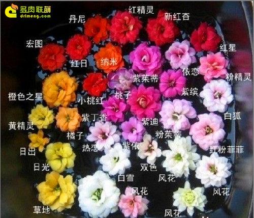 华南常见植物识别图鉴