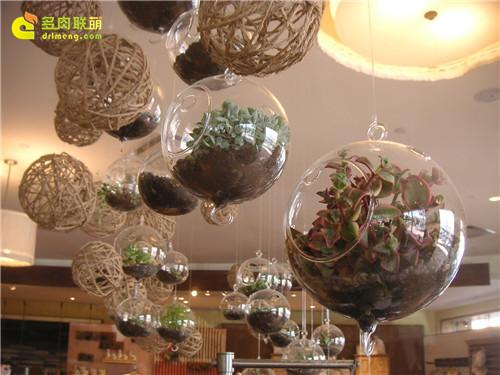 多肉圣诞礼物-玻璃花房-2