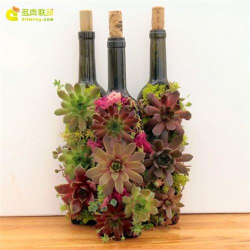 多肉圣诞礼物-个性花盆多肉-2