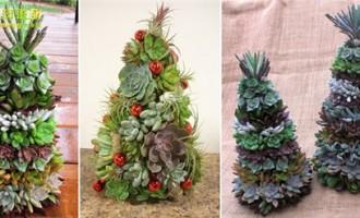 圣诞节怎么能少得了多肉圣诞树
