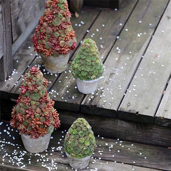 圣诞礼物,多肉圣诞树