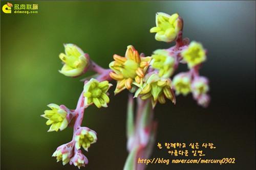春天开花的多肉植物  