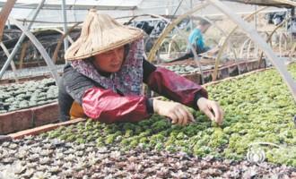 从漳州看多肉植物市场