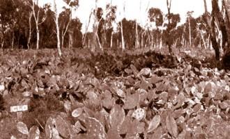 如何有效的杀死最难杀死的多肉植物