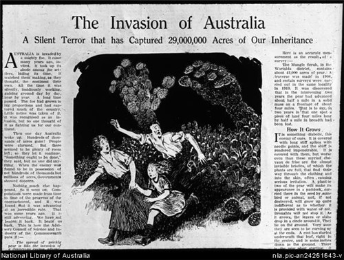澳洲仙人掌防治之路-3