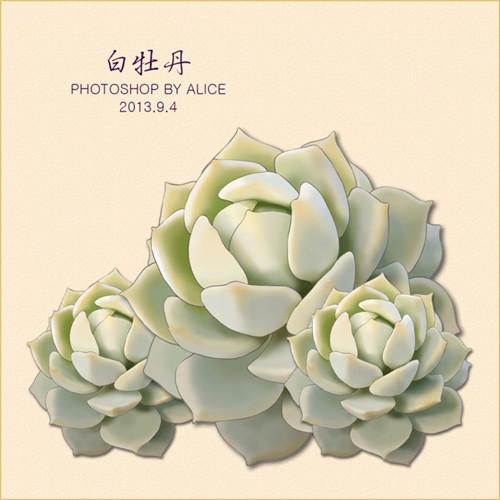 photoshop画的白牡丹