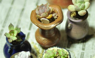 陶盆和瓷盆有什么区别