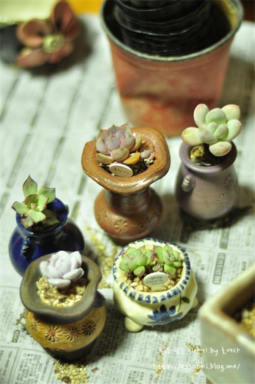 种植多肉植物的瓷盆-1