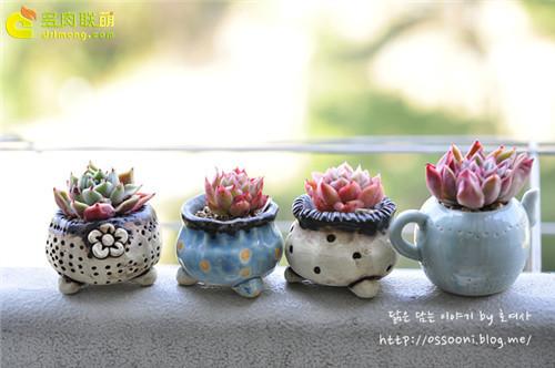 种植多肉植物的瓷盆-2
