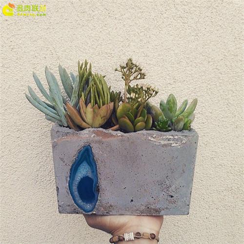 水泥花盆怎么制作-多肉联萌