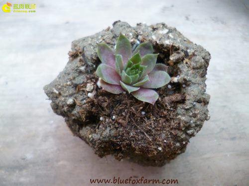 让人心动的水泥花盆-4