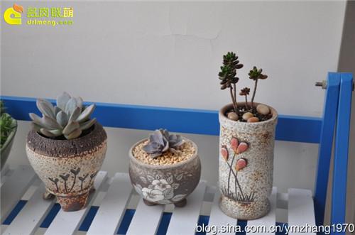 种植多肉植物的陶盆-2