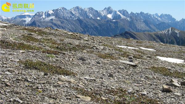 加拿大阿尔伯塔省(Alberta)高山上-1