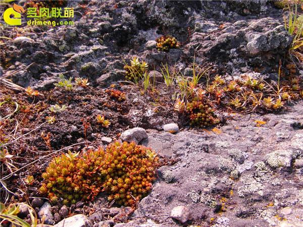 高山上的多肉植物19