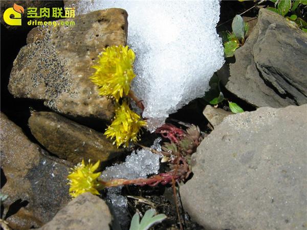 高山上的多肉植物23